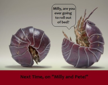 milly and pete