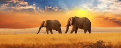 cropped-elephants1.jpg